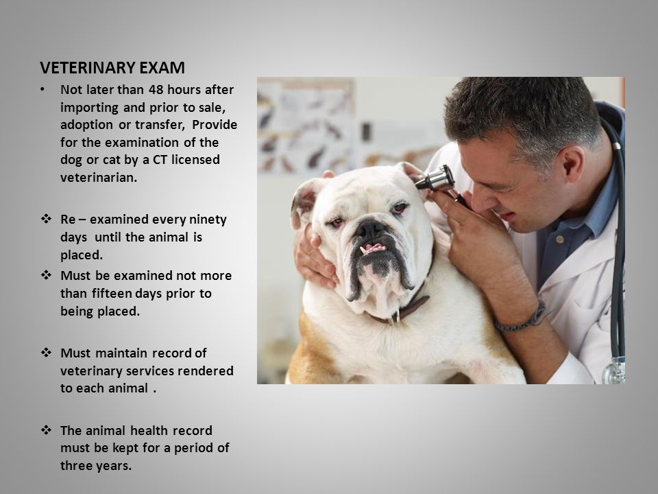 VETERINARY EXAM Not later than 48 hours after importing and prior to sale, adoption or transfer, Provide for the examination of the dog or cat by a CT licensed veterinarian.
