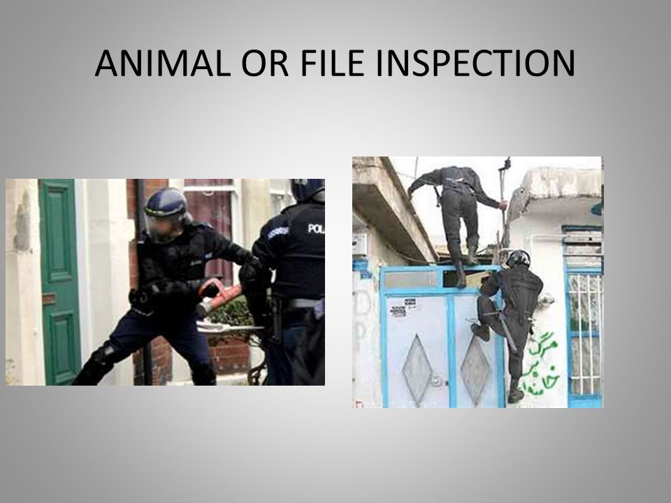 ANIMAL OR FILE INSPECTION