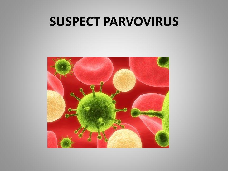 SUSPECT PARVOVIRUS