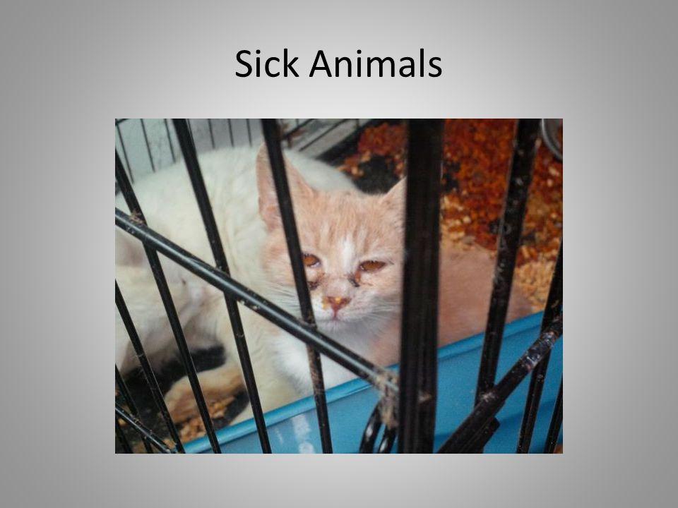 Sick Animals