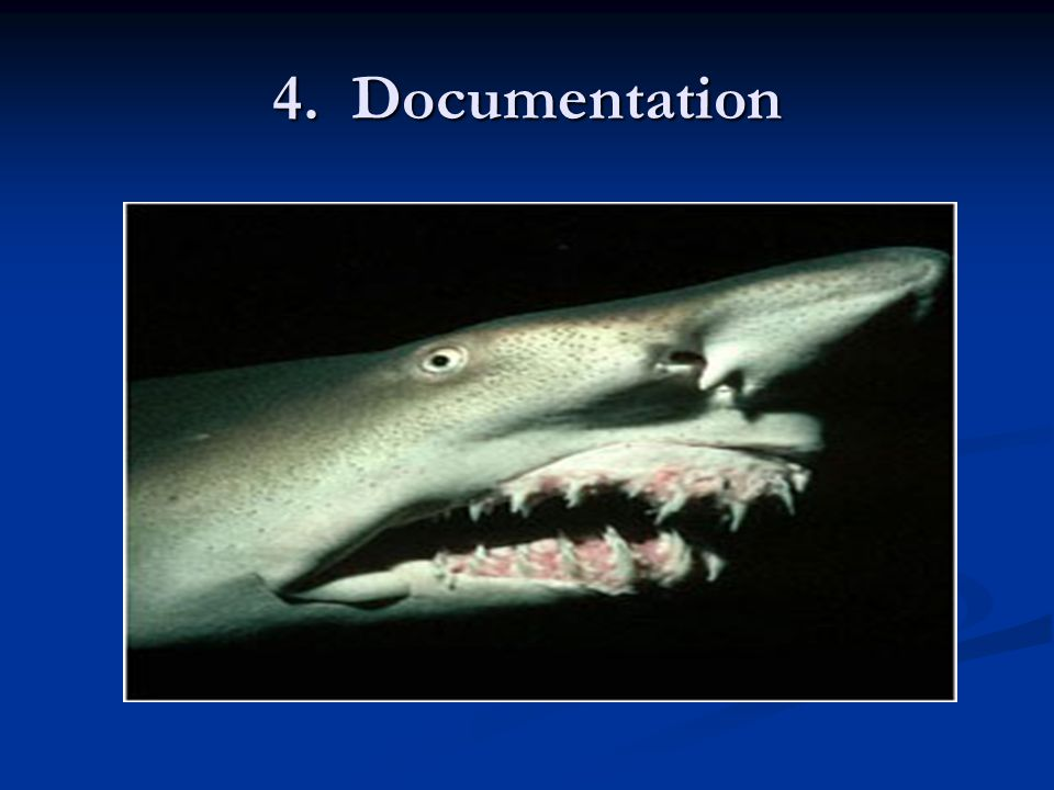 4. Documentation