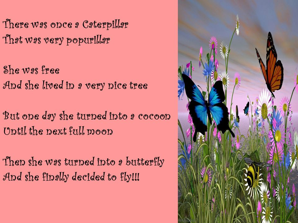 There was once a Caterpillar That was very popurillar She was free And she lived in a very nice tree But one day she turned into a cocoon Until the next full moon Then she was turned into a butterfly And she finally decided to fly!!!