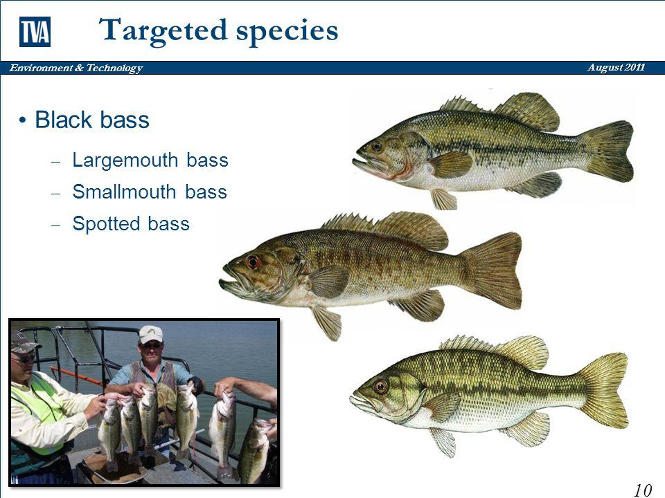 Environment & Technology August 2011 Targeted species Black bass – Largemouth bass – Smallmouth bass – Spotted bass 10