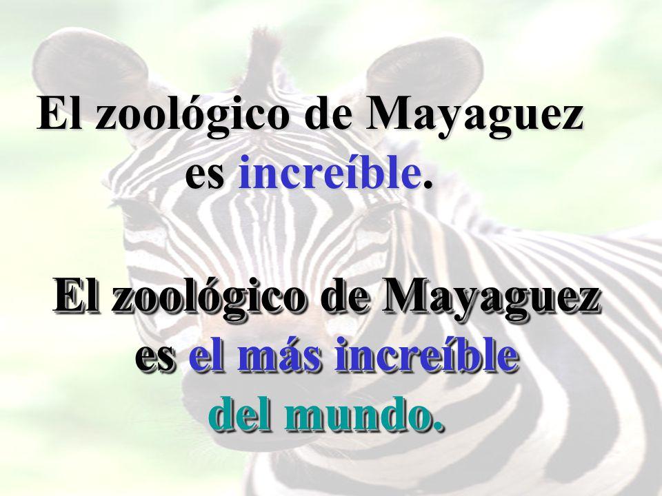 El zoológico de Mayaguez es increíble. El zoológico de Mayaguez es el más increíble del mundo.