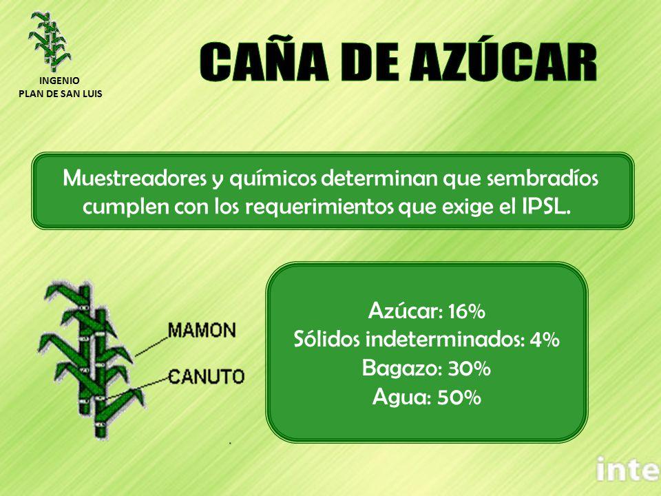 Azúcar: 16% Sólidos indeterminados: 4% Bagazo: 30% Agua: 50% Muestreadores y químicos determinan que sembradíos cumplen con los requerimientos que exi