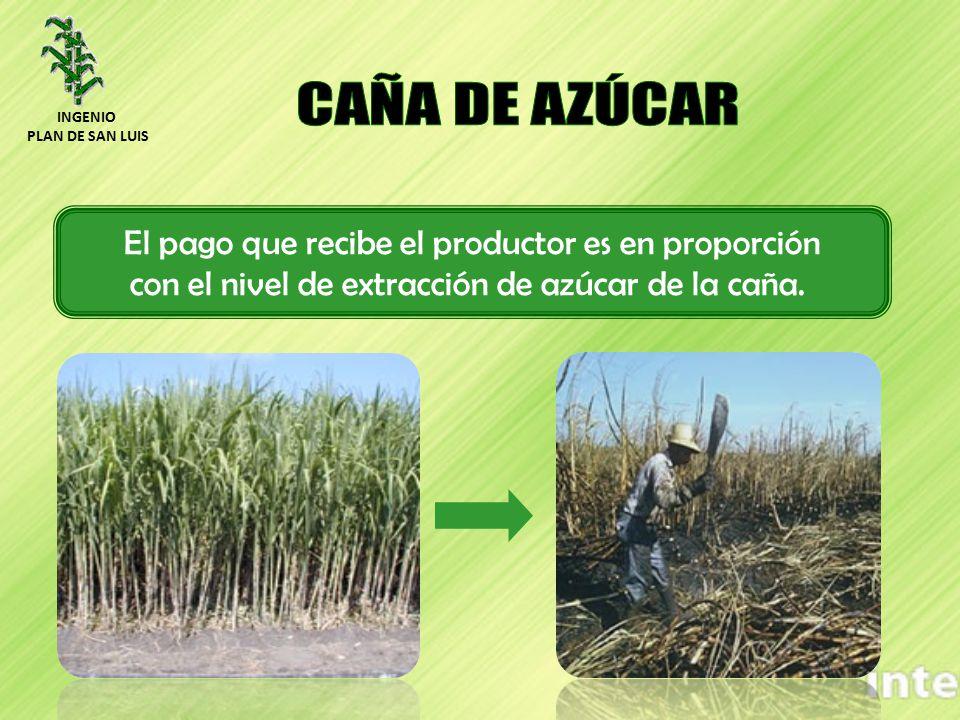 El pago que recibe el productor es en proporción con el nivel de extracción de azúcar de la caña. INGENIO PLAN DE SAN LUIS