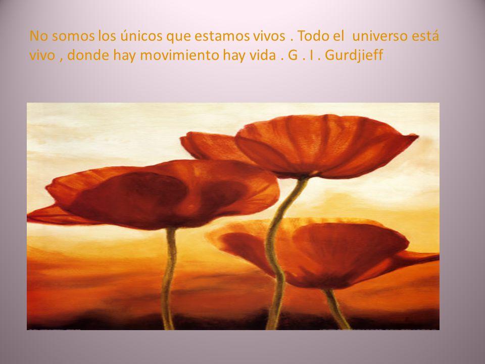 Una ceremonia es un libro en el que mucho hay escrito. Hay más contenido en una ceremonia que en cien libros. G. I. Gurdjieff