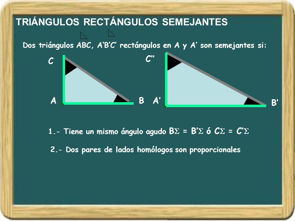 TRIÁNGULOS RECTÁNGULOS SEMEJANTES Dos triángulos ABC, A'B'C' rectángulos en A y A' son semejantes si: AB C A' B' C'' 1.- Tiene un mismo ángulo agudo B
