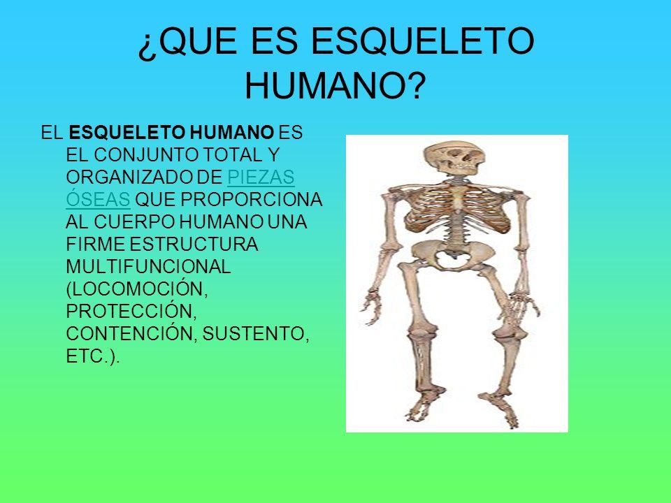 ¿QUE ES ESQUELETO HUMANO? EL ESQUELETO HUMANO ES EL CONJUNTO TOTAL Y ORGANIZADO DE PIEZAS ÓSEAS QUE PROPORCIONA AL CUERPO HUMANO UNA FIRME ESTRUCTURA