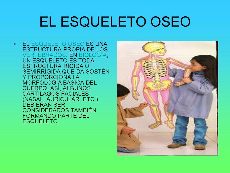 EL ESQUELETO OSEO EL ESQUELETO ÓSEO ES UNA ESTRUCTURA PROPIA DE LOS VERTEBRADOS. EN BIOLOGÍA, UN ESQUELETO ES TODA ESTRUCTURA RÍGIDA O SEMIRRÍGIDA QUE