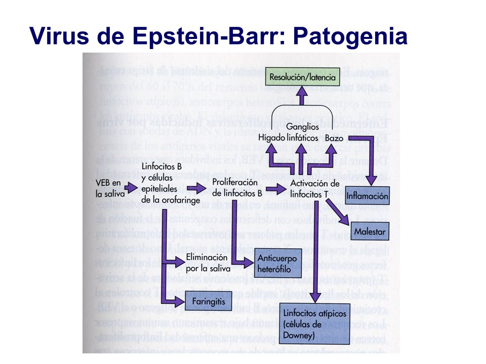 Virus de Epstein-Barr: Patogenia