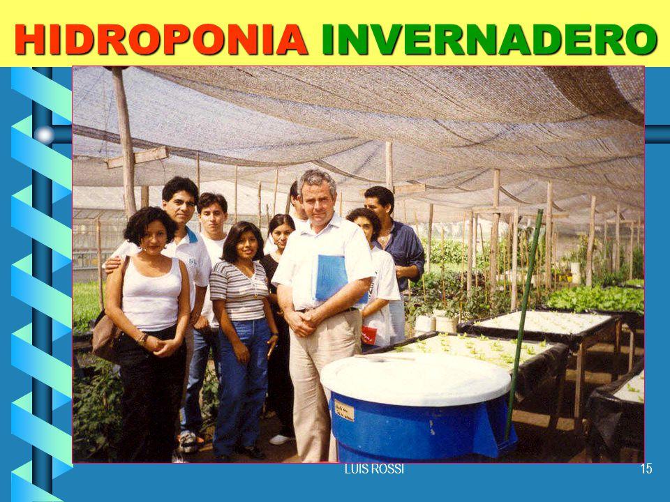 LUIS ROSSI15 HIDROPONIA INVERNADERO