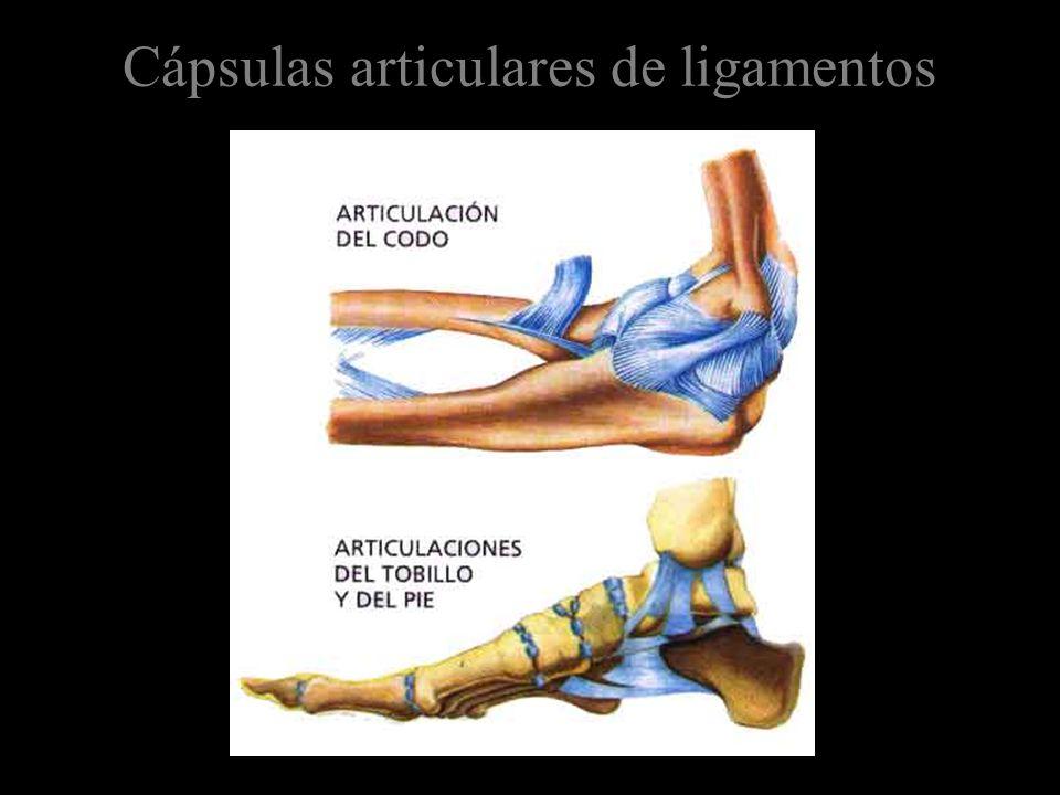 Cápsulas articulares de ligamentos