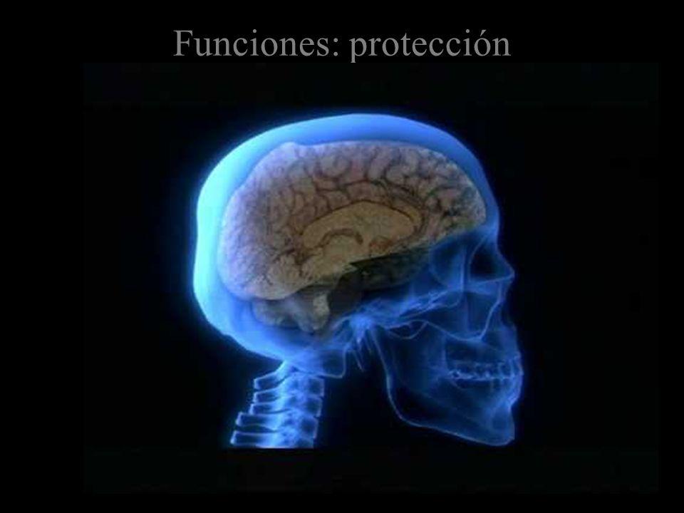 Funciones: protección
