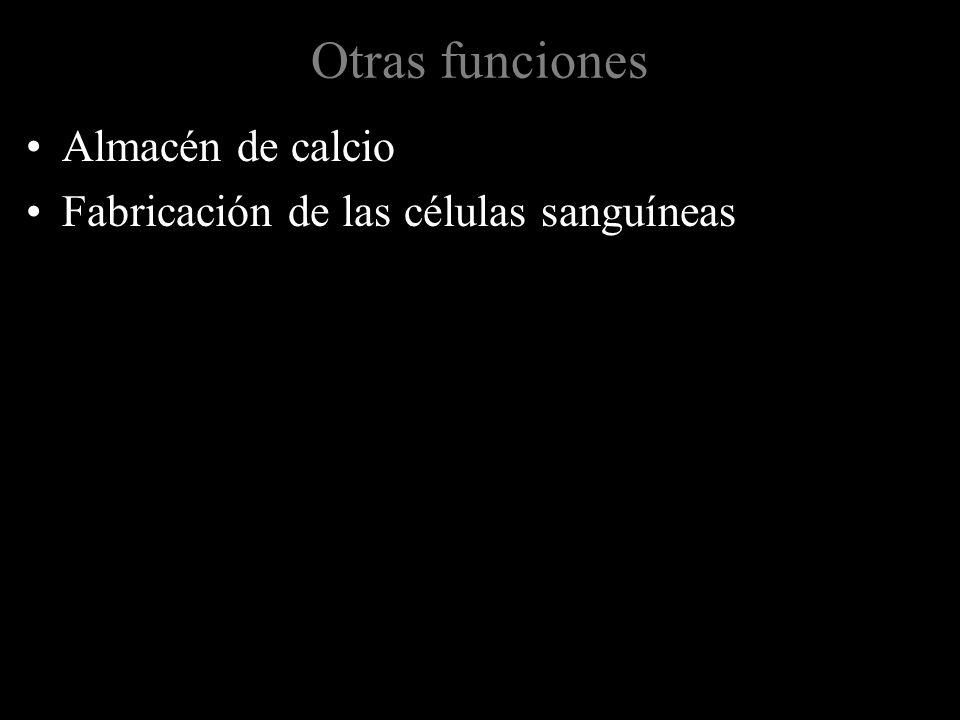 Otras funciones Almacén de calcio Fabricación de las células sanguíneas