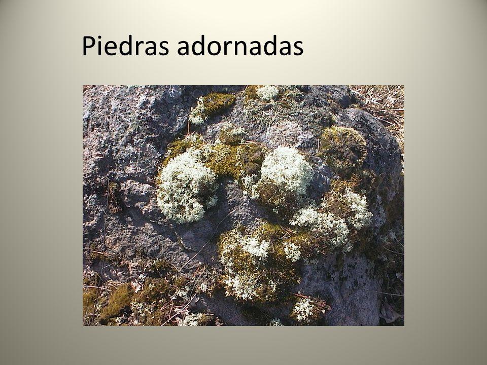 Piedras adornadas