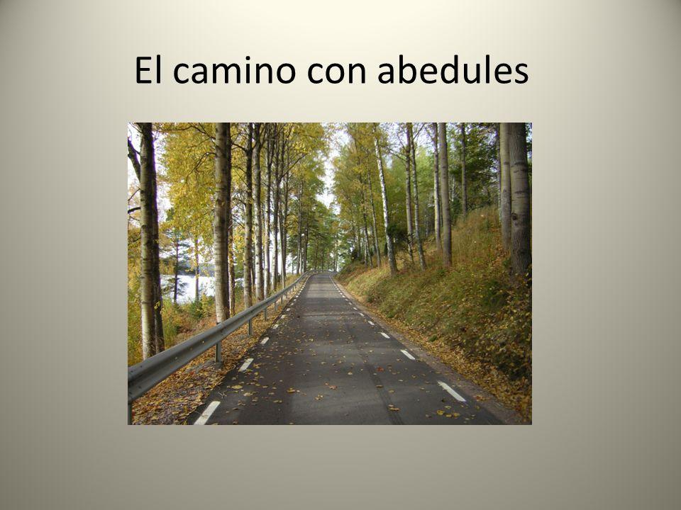 El camino con abedules