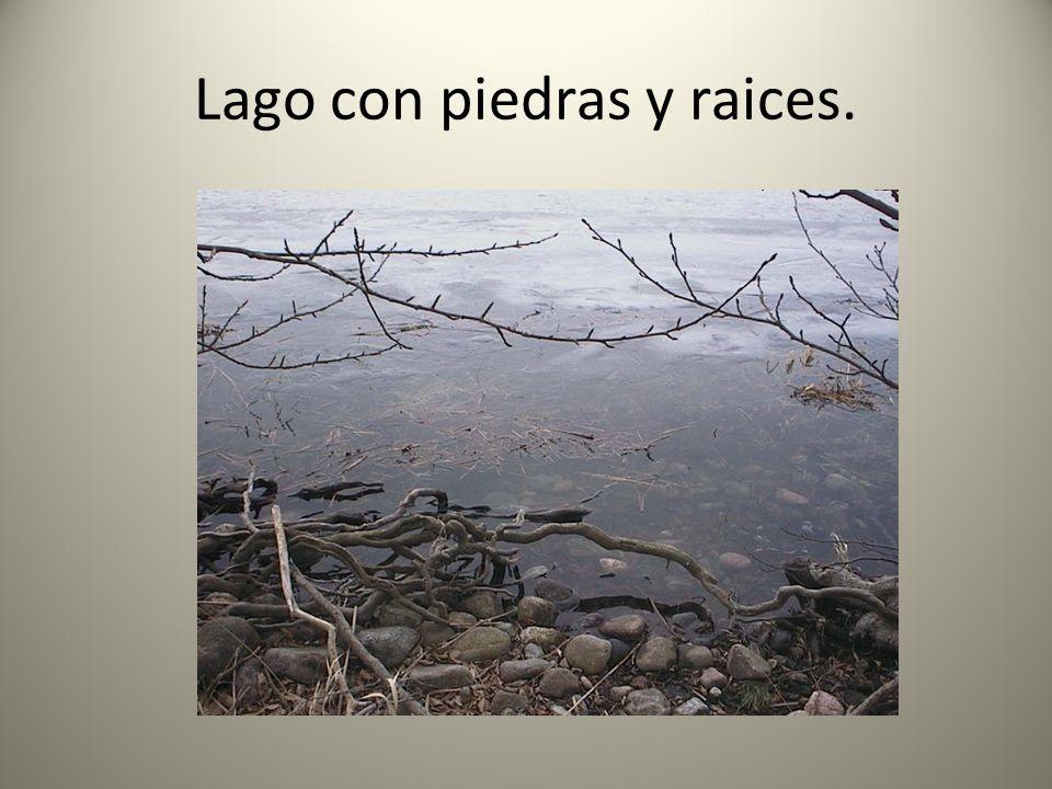 Lago con piedras y raices.