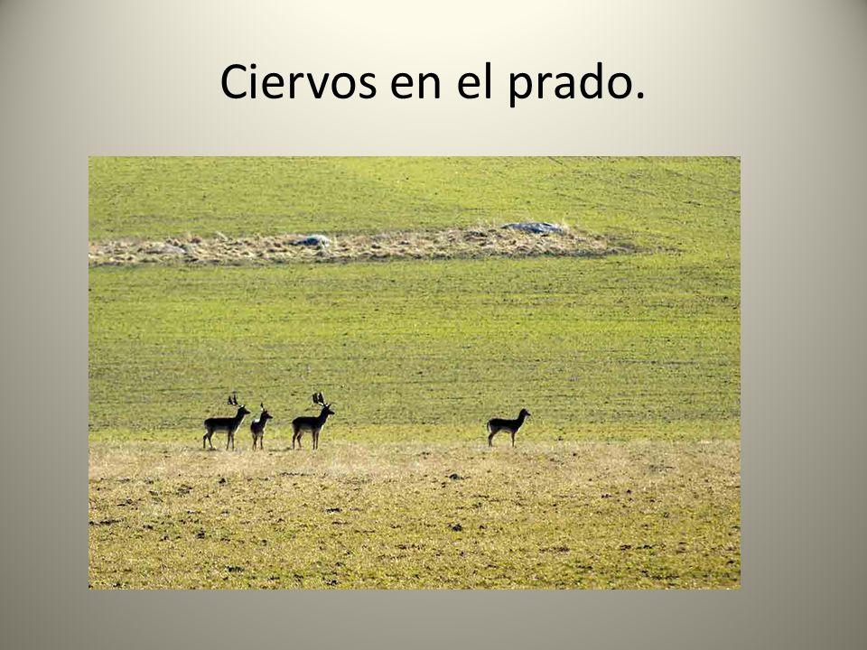 Ciervos en el prado.