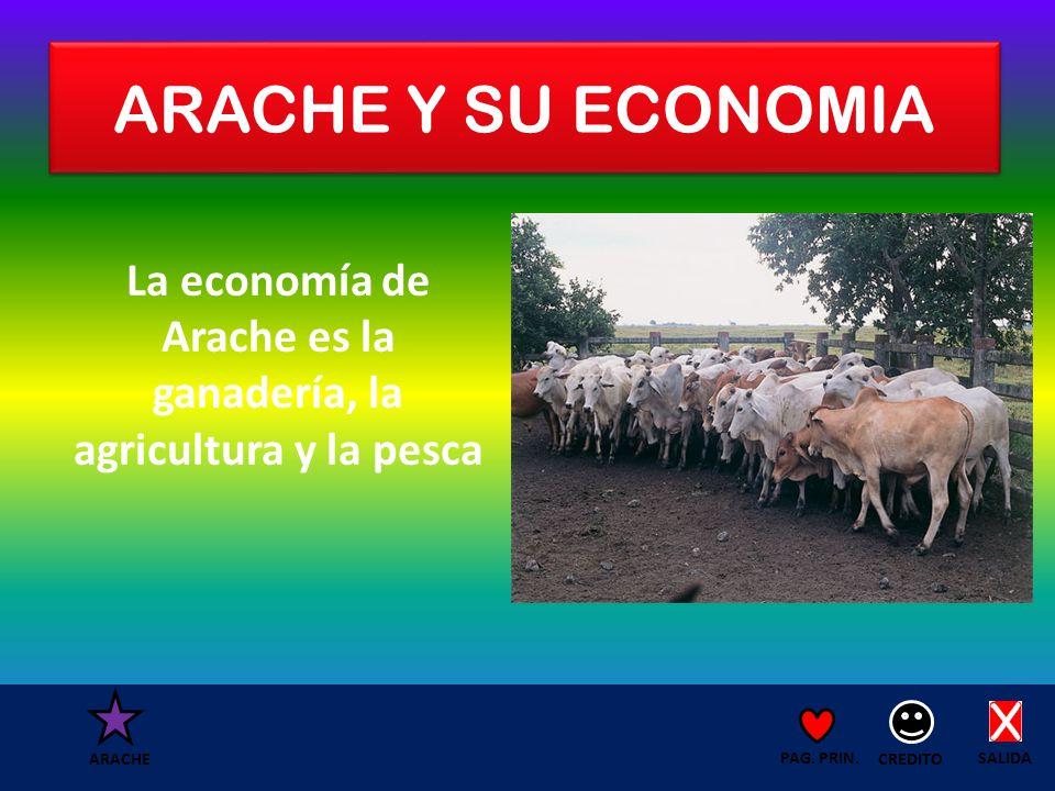 ARACHE Y SU ECONOMIA La economía de Arache es la ganadería, la agricultura y la pesca SALIDA CREDITO PAG.