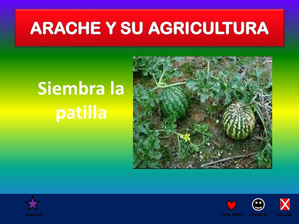 Siembra la patilla SALIDA CREDITO PAG. PRIN. ARACHE