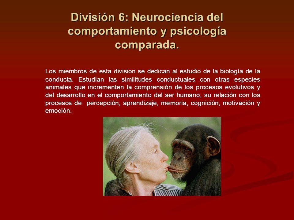 División 6: Neurociencia del comportamiento y psicología comparada. Los miembros de esta division se dedican al estudio de la biología de la conducta.