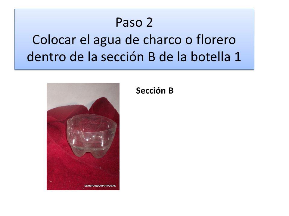 Paso 2 Colocar el agua de charco o florero dentro de la sección B de la botella 1 Sección B