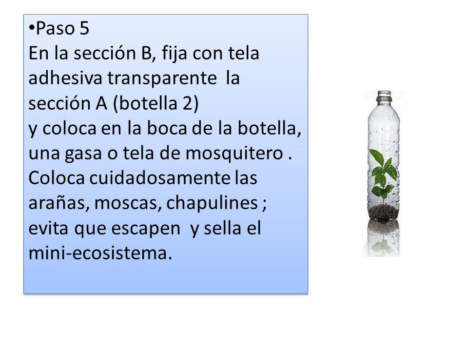 Paso 5 En la sección B, fija con tela adhesiva transparente la sección A (botella 2) y coloca en la boca de la botella, una gasa o tela de mosquitero.