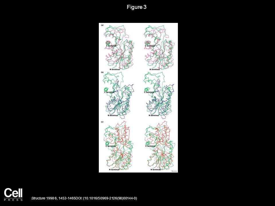 Figure 3 Structure 1998 6, 1453-1465DOI: (10.1016/S0969-2126(98)00144-0)