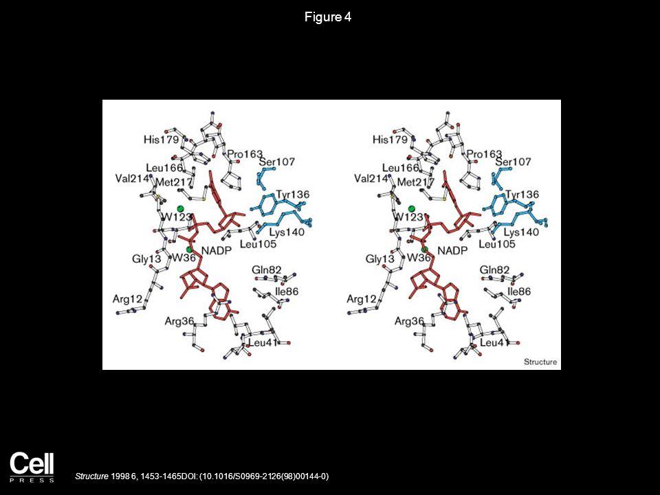 Figure 4 Structure 1998 6, 1453-1465DOI: (10.1016/S0969-2126(98)00144-0)