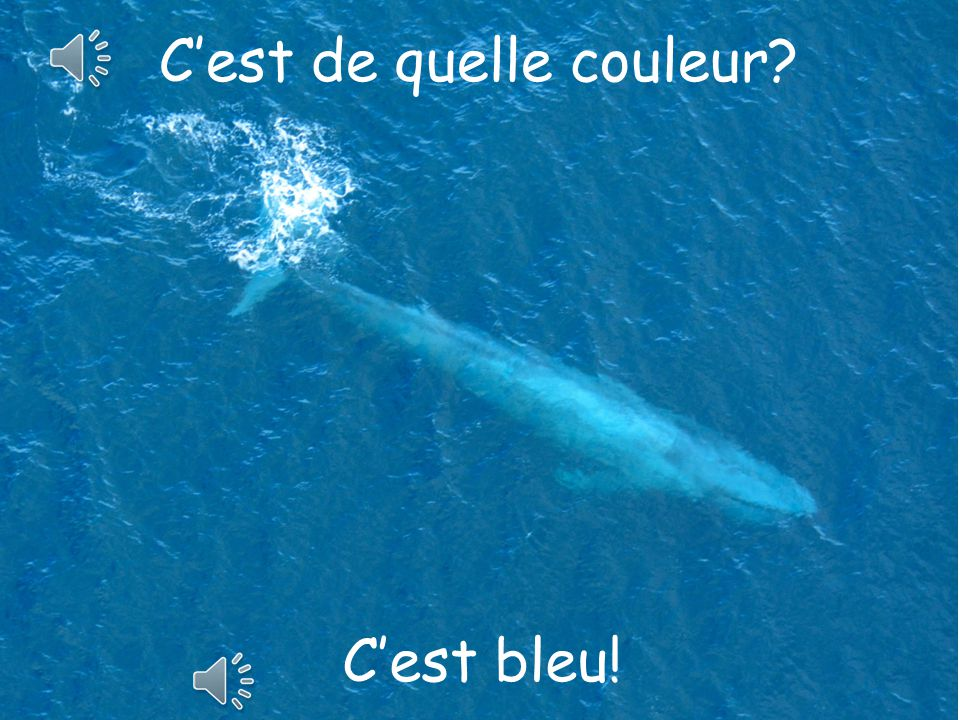 1.Pupils have to look at the following pictures and say what the colour is in French using C'est + the colour.