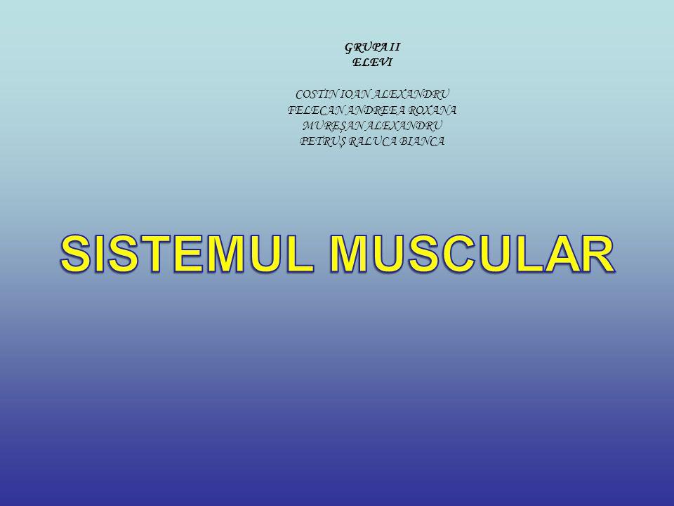 Sistemul muscular-totalitatea muschilor care ajuta la executia locomotiei