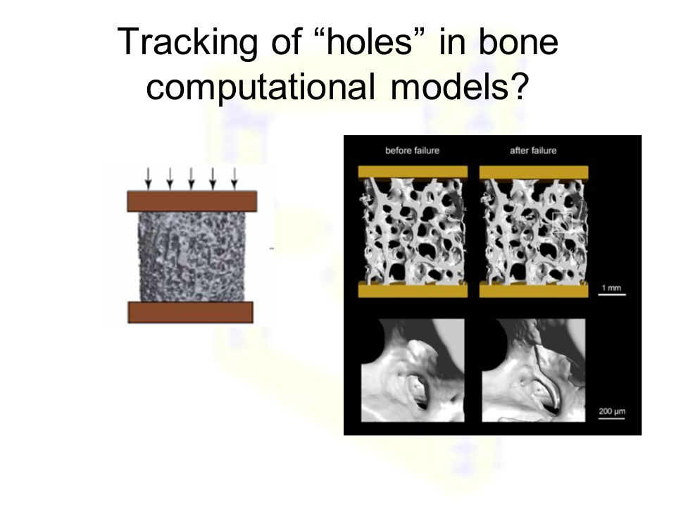 "Tracking of ""holes"" in bone computational models?"