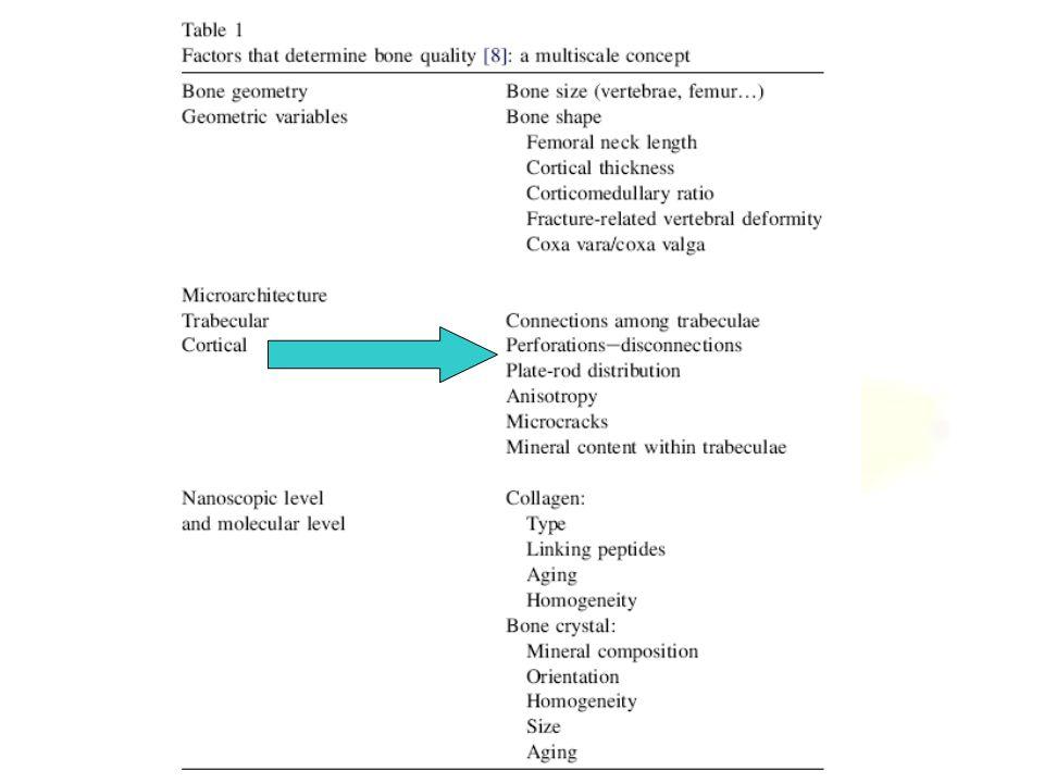 Trabecular Bone Anatomy