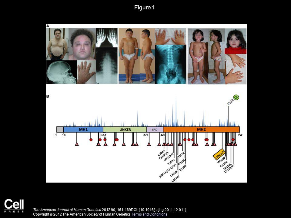 Figure 1 The American Journal of Human Genetics 2012 90, 161-169DOI: (10.1016/j.ajhg.2011.12.011) Copyright © 2012 The American Society of Human Genet