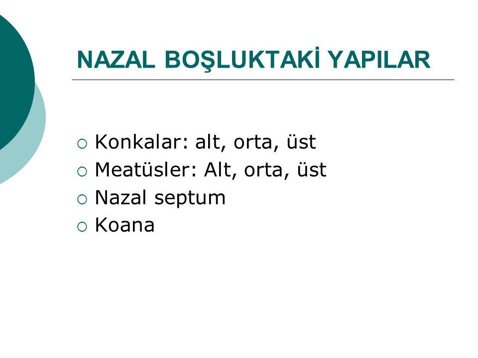 NAZAL BOŞLUKTAKİ YAPILAR  Konkalar: alt, orta, üst  Meatüsler: Alt, orta, üst  Nazal septum  Koana