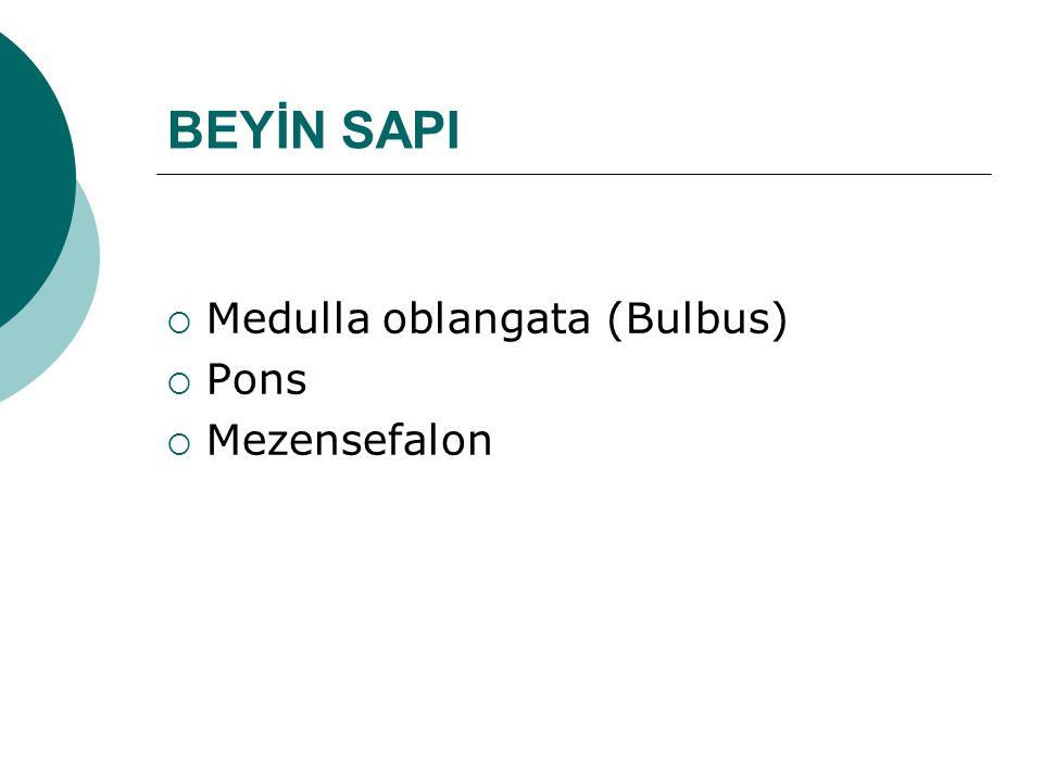 BEYİN SAPI  Medulla oblangata (Bulbus)  Pons  Mezensefalon