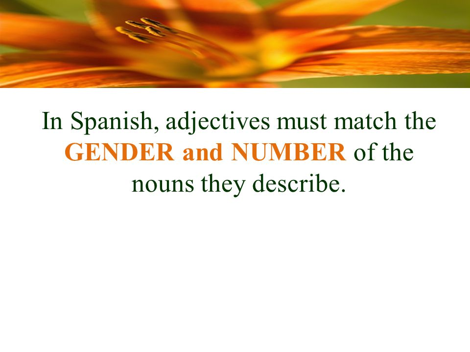 In Spanish, adjectives must match the GENDER and NUMBER of the nouns they describe.