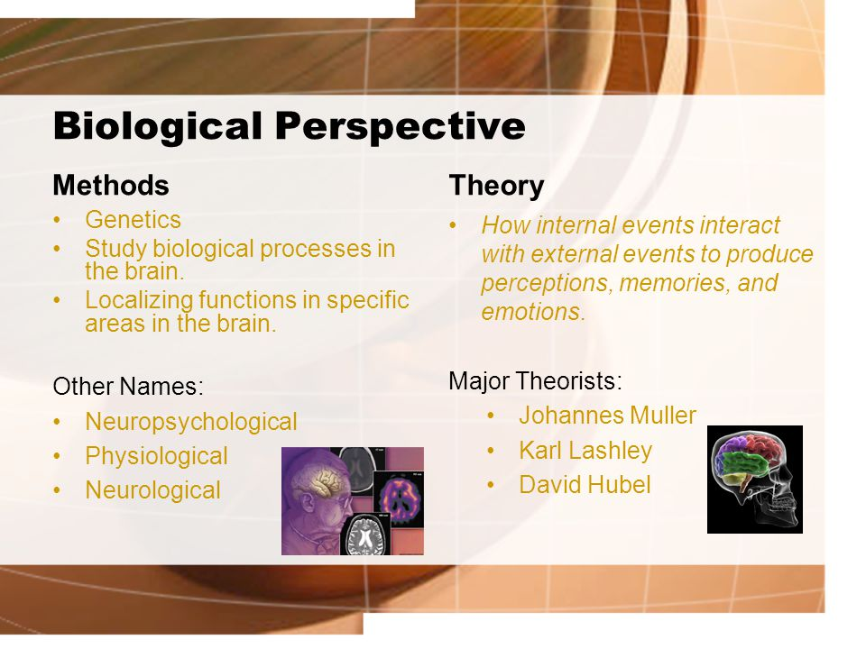 Biological Perspective Methods Genetics Study biological processes in the brain.