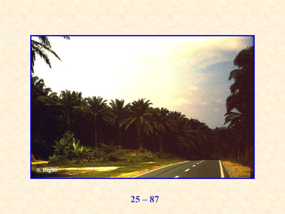 25 – 87 S. Diglio