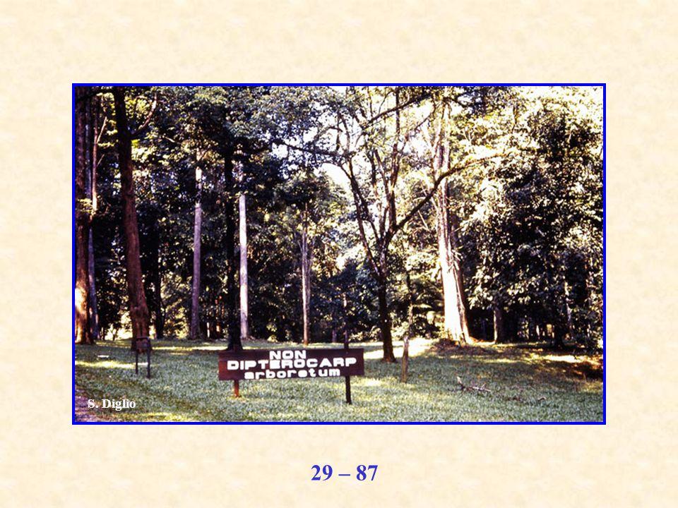29 – 87 S. Diglio