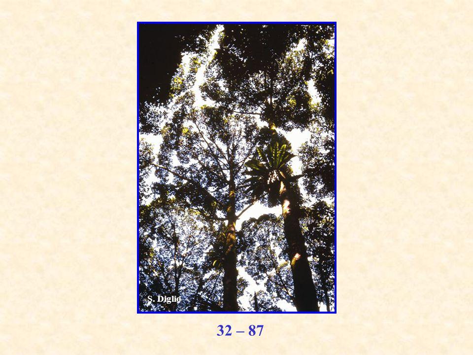 32 – 87 S. Diglio