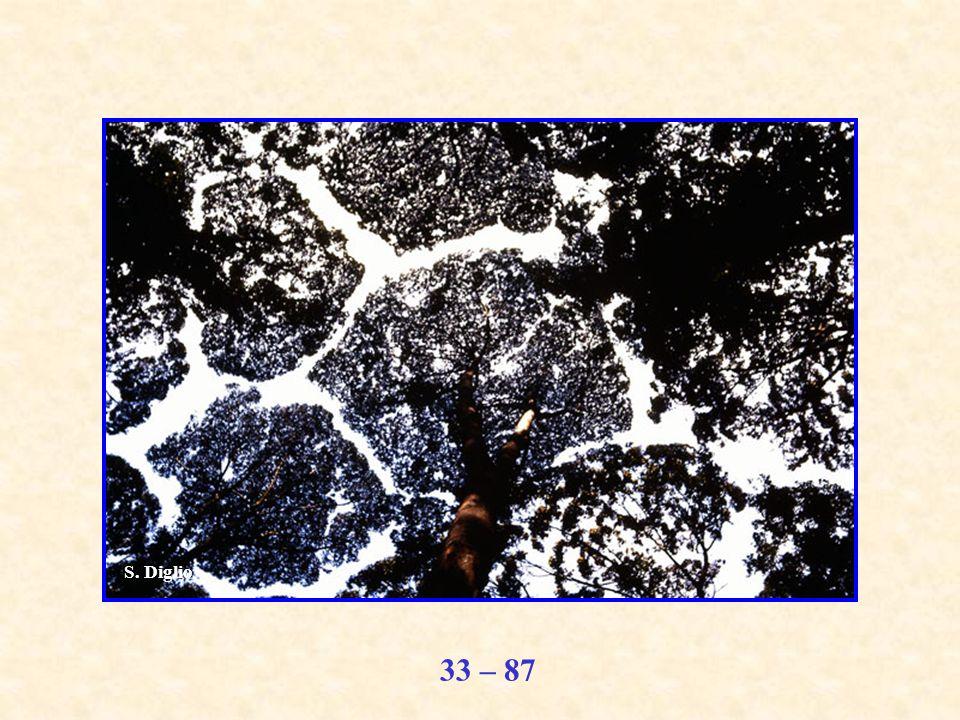 33 – 87 S. Diglio