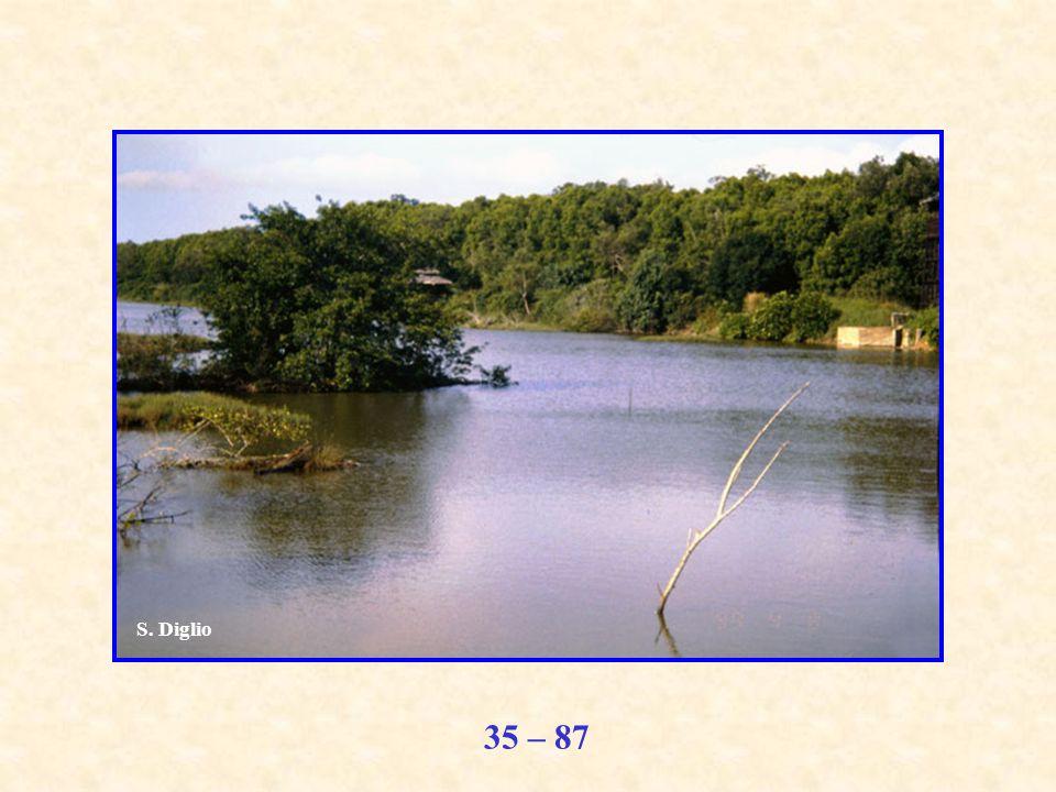 35 – 87 S. Diglio