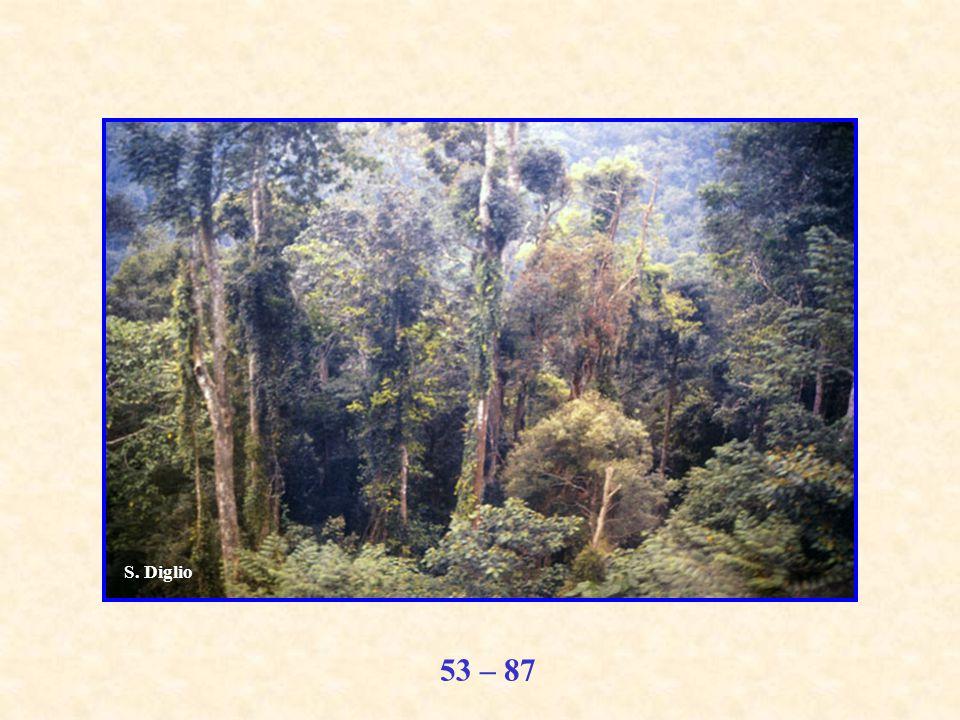 53 – 87 S. Diglio