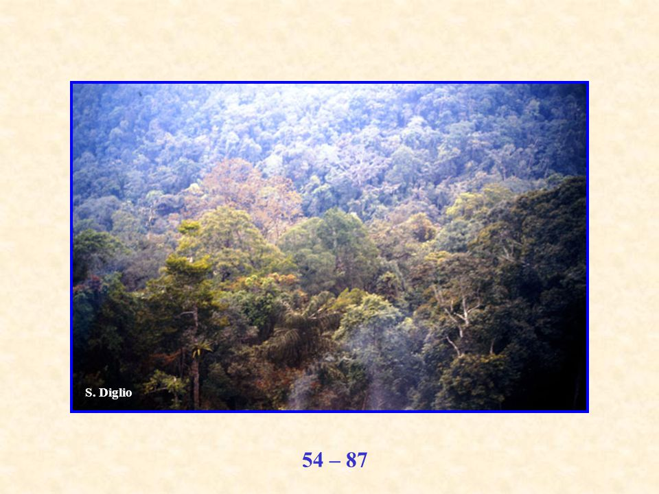 54 – 87 S. Diglio