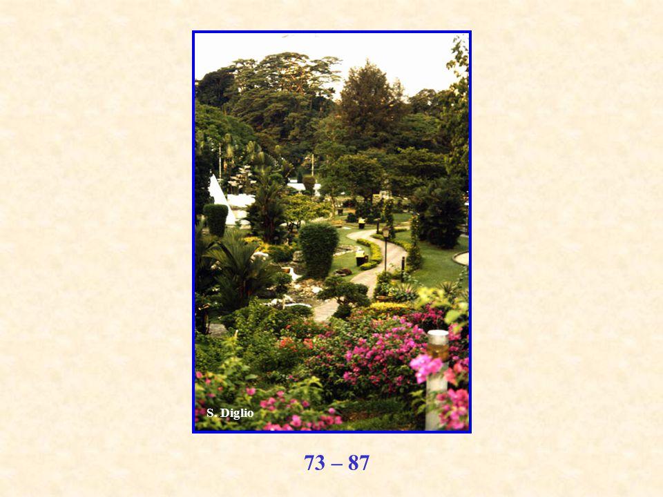 73 – 87 S. Diglio