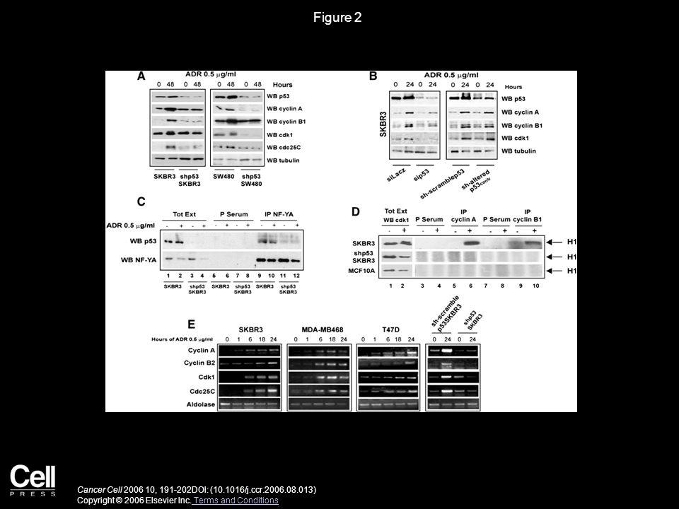 Figure 2 Cancer Cell 2006 10, 191-202DOI: (10.1016/j.ccr.2006.08.013) Copyright © 2006 Elsevier Inc.