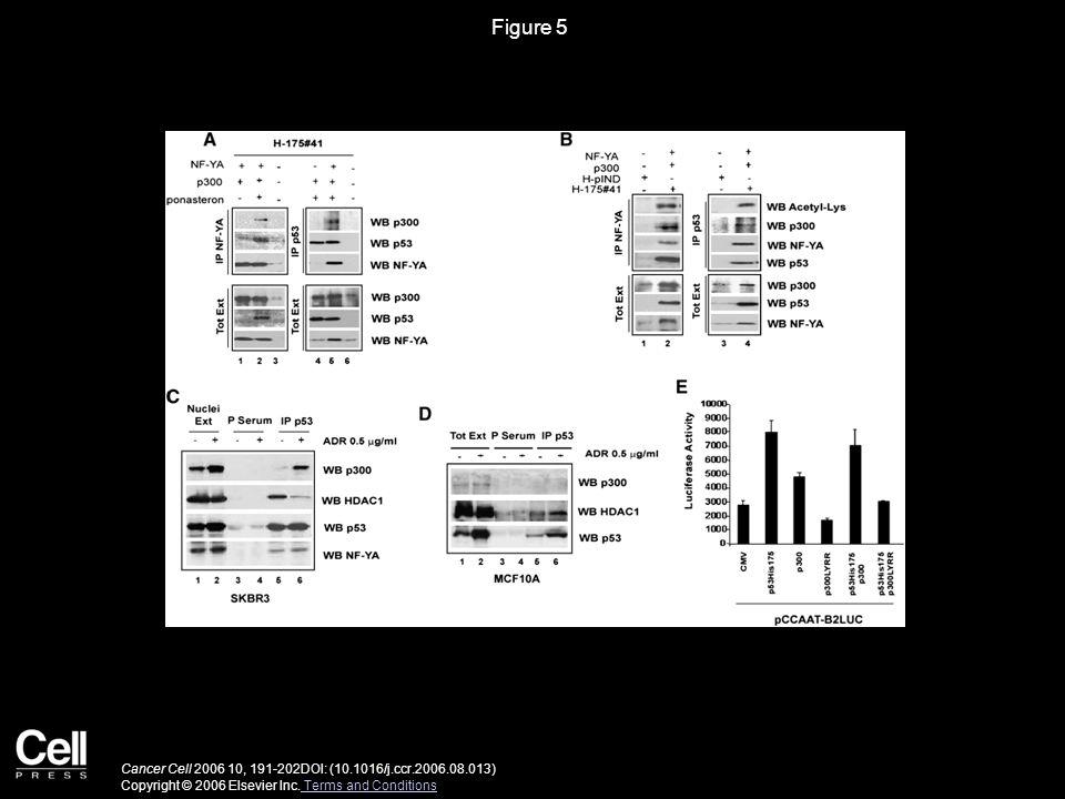 Figure 5 Cancer Cell 2006 10, 191-202DOI: (10.1016/j.ccr.2006.08.013) Copyright © 2006 Elsevier Inc.