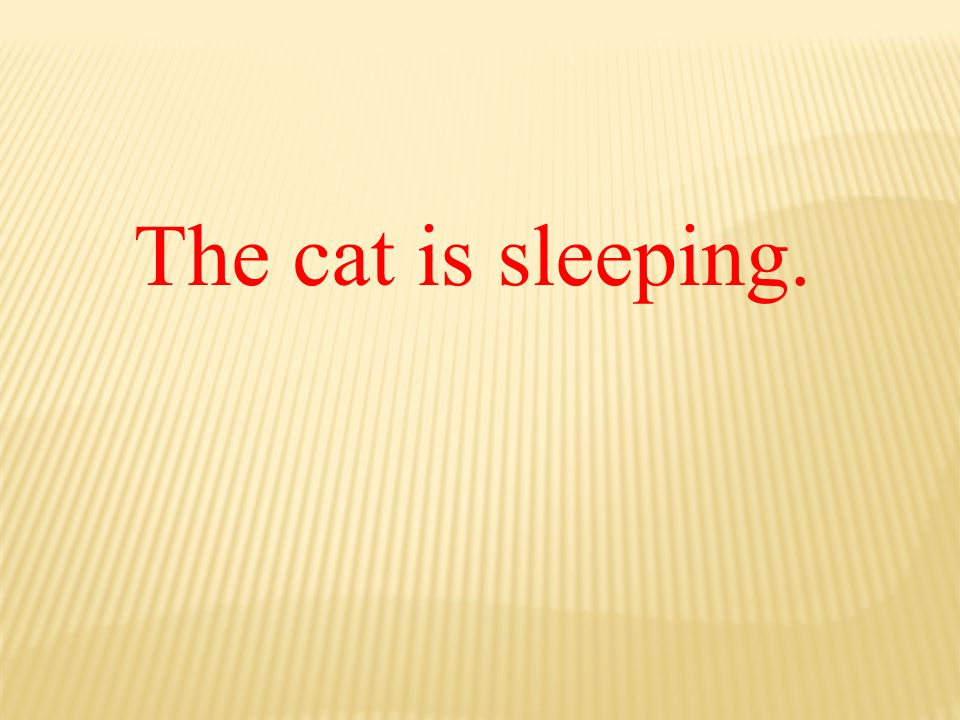 The cat is sleeping.